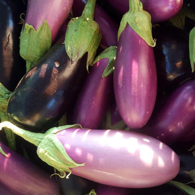 Organic Produce: Eggplant