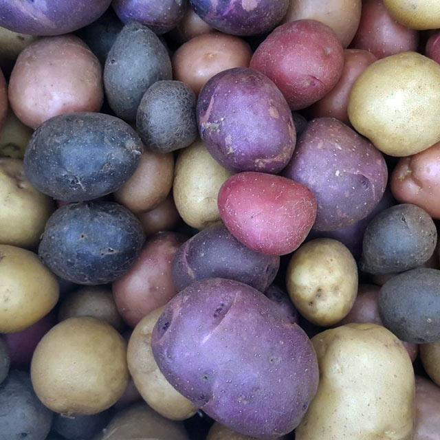 Organic Produce: Potatoes