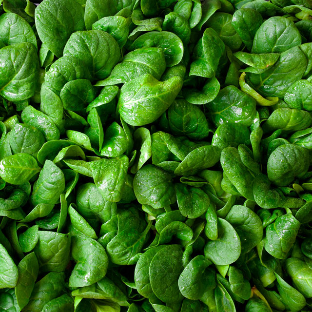 Organic Produce: Spinach